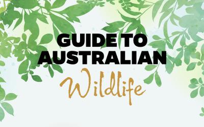 Guide to Australian Wildlife